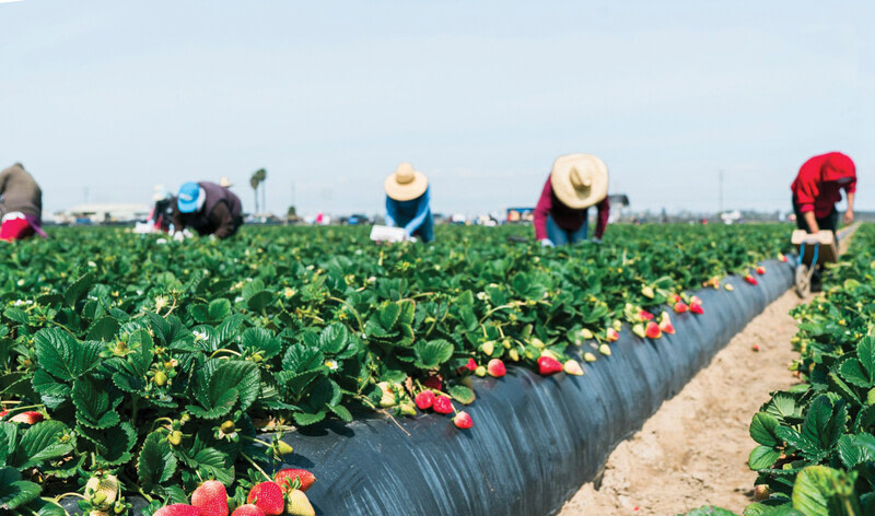 Farm Workers Needed In United States Of America