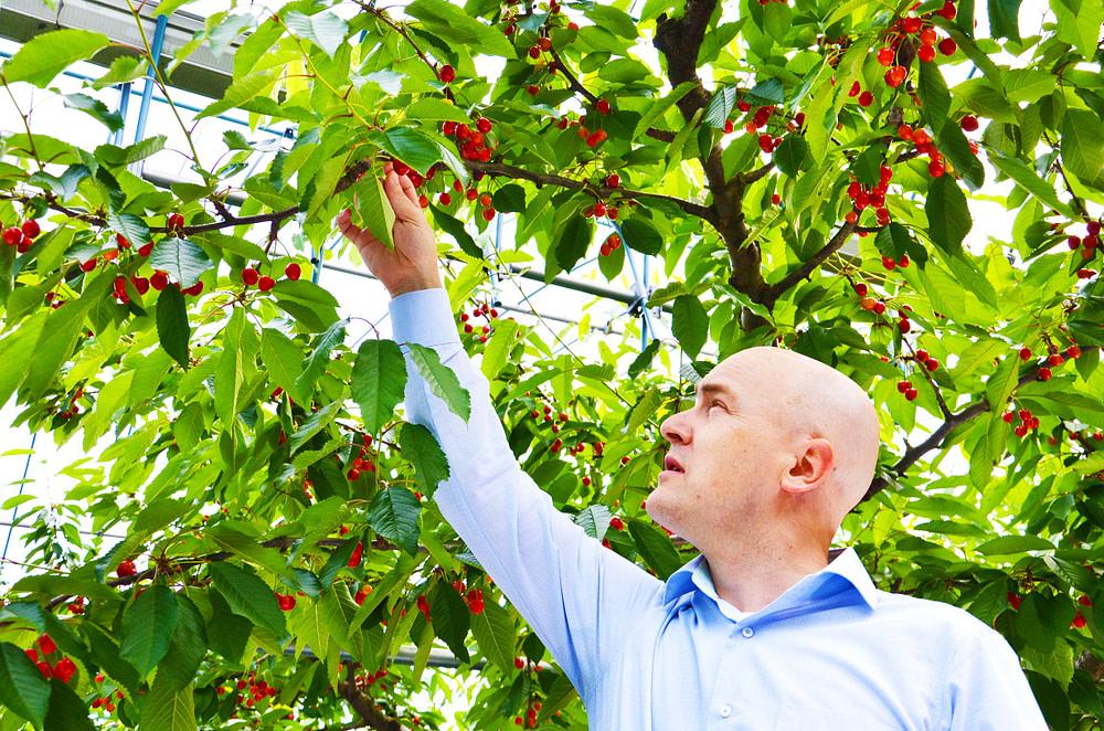 Job For Fruit Picker In Canada
