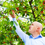 Job For Fruit Picker In Canada